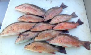 Brain and sam fishing charter 1