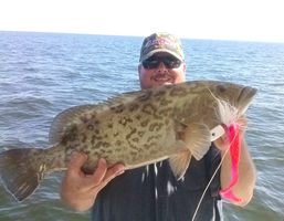 grouper fishing charters tampa bay florida - spanish sardine