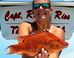 hogfish fishing charters tampa bay florida - spanish sardine