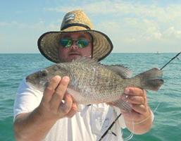 mangrove fishing charters tampa bay florida - spanish sardine