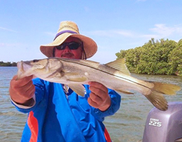snook fishing charters tampa bay florida - spanish sardine